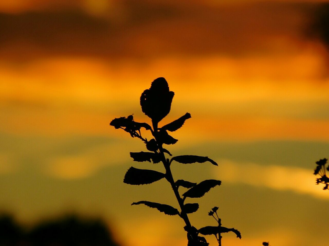 Silhouette Plant Against Cloudy Sky During Sunset