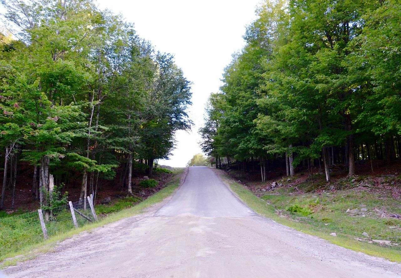 The Way Forward Outdoors Nature Growth No People Tranquility Day Road Scenics Tree Sky Canada, Eh? Canadian Canada EyeEmNewHere Tranquility Beauty In Nature
