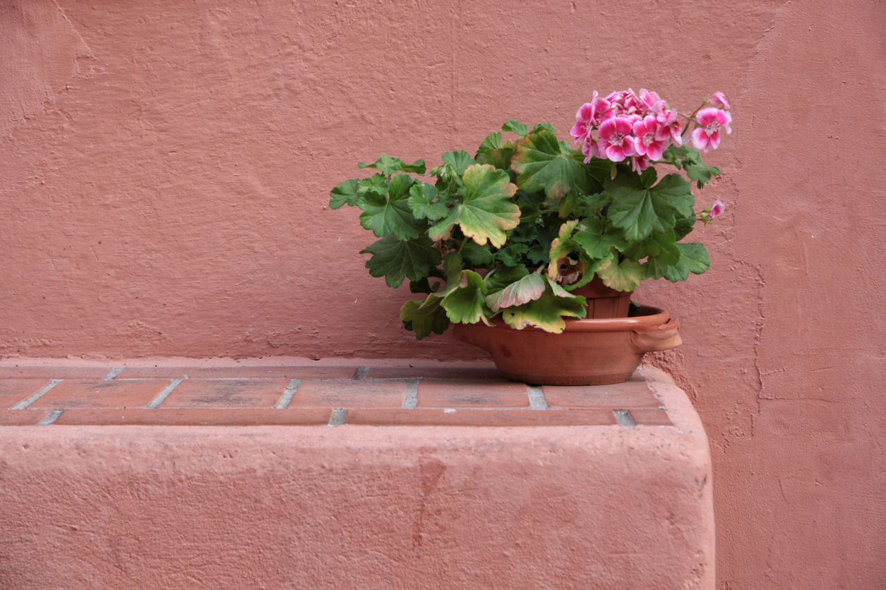 Bench Copy Space Natural Light Pink Wall Building Exterior Day Daylight Flower Freshness Italy Leaf Liguria No People One Person Outdoors Pelargonium Plant Plaster Potted Plant Pottery Signs Of Time Still Life Terracotta Village