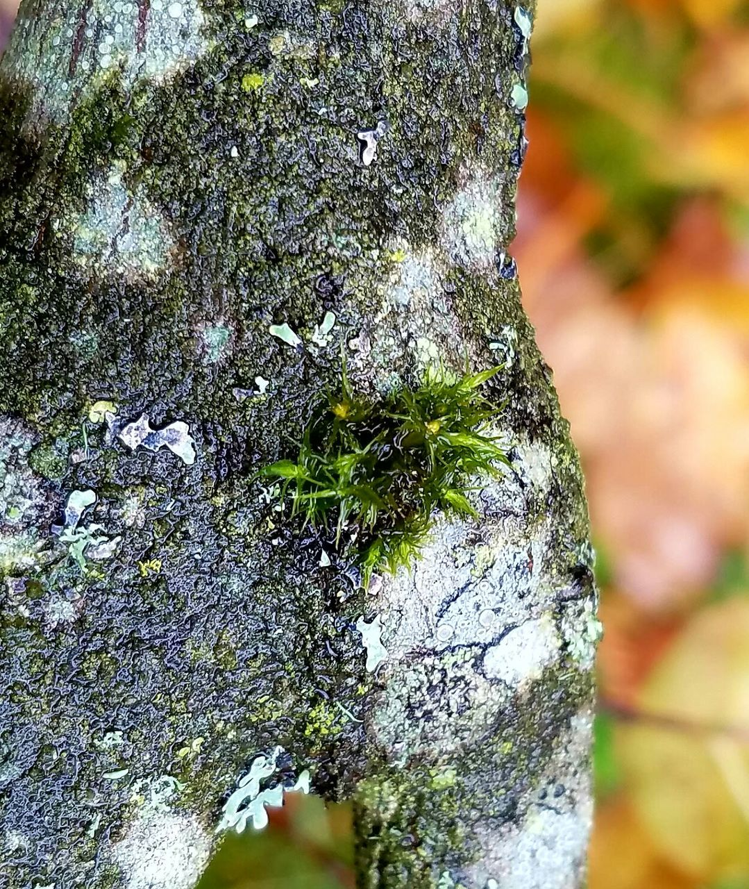lichen, moss, tree trunk, nature, textured, day, close-up, rough, no people, bark, outdoors, growth, rock - object, tree, beauty in nature, fungus, tree stump, fragility
