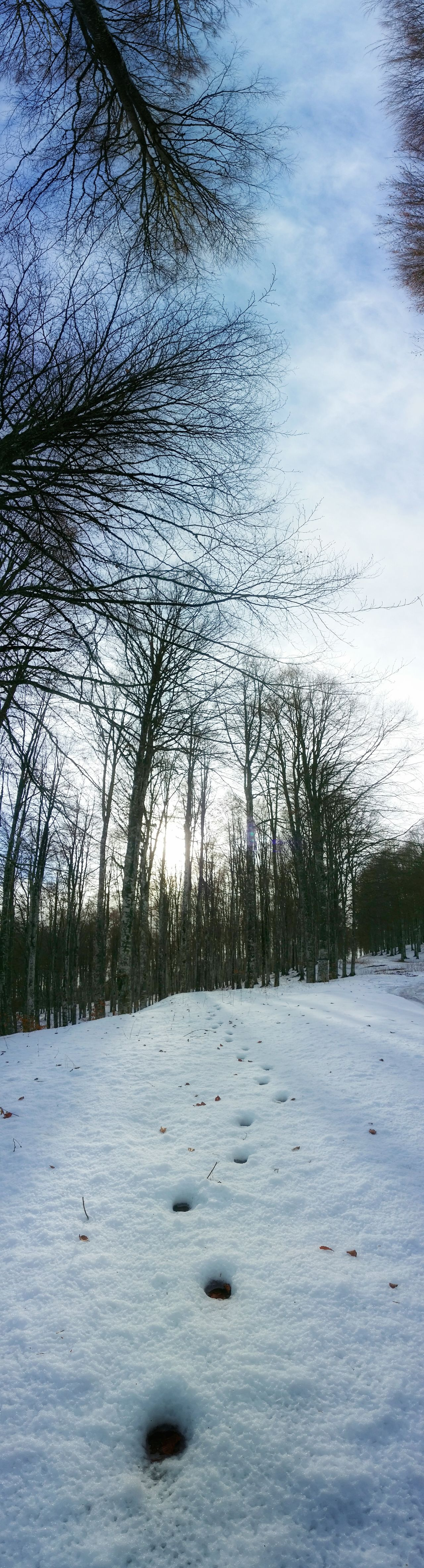 It's Cold Outside Showcase: January Deer Tracks Mobile Photography Art Fineart Panoramic Views Backlight Alpine Hiking Monte Pizzoc Snow And Sun Long Shadows Pattern Pieces