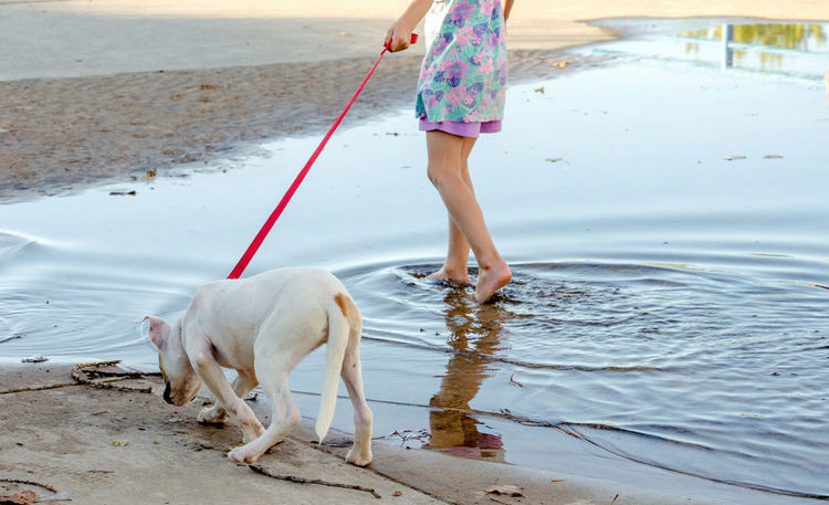 a puppy happily walks his human companion on a beach in Michigan USA Exercise Fun Summertime Walking Around Animal Themes barefoot Beach Day Dog Dog Lead Domestic Animals Full Frame Full Length Leisure Activity Low Section Mammal Nature One Animal One Person Outdoors People Pet Leash Pets Real People Water