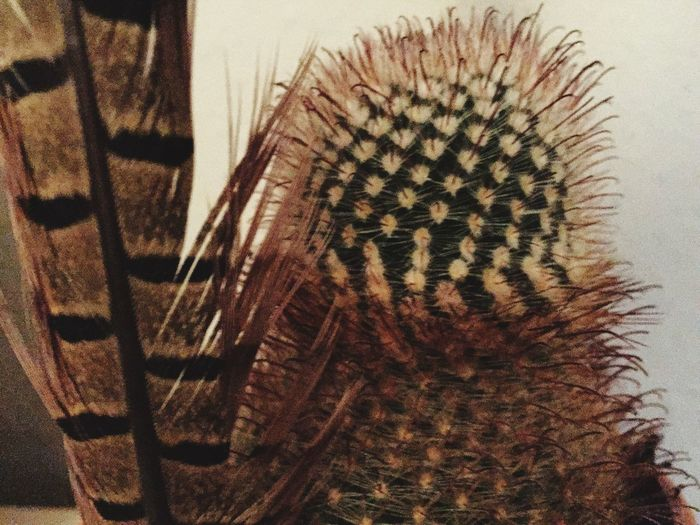 Green Brown Cactus Flower Feather  Close-up Day