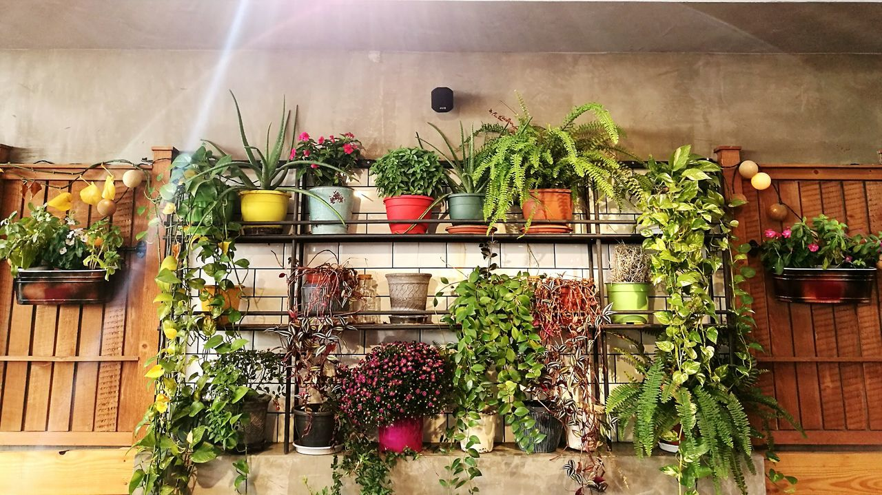 potted plant, plant, growth, green color, nature, flower, no people, window box, outdoors, day, architecture, beauty in nature, greenhouse, freshness, plant nursery