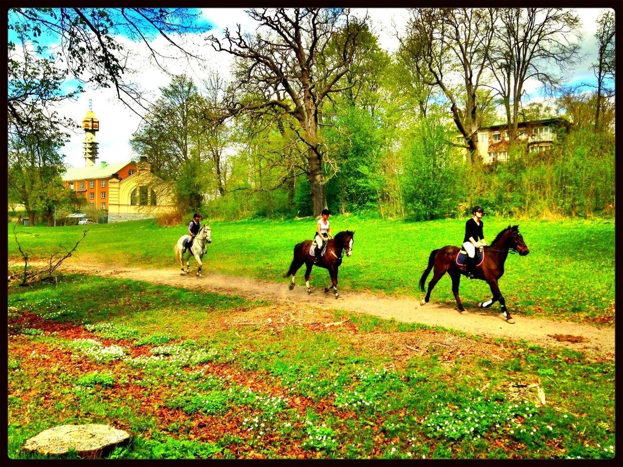 Horse Horse Riding HorseNAround