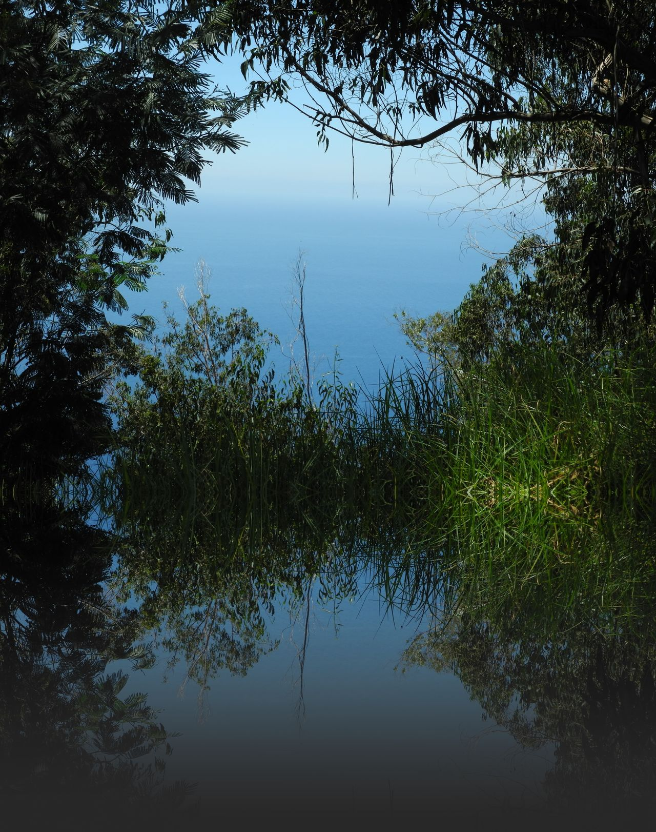 Beauty In Nature Day Grass Growth Lake Nature No People Outdoors Reflection Sky Tranquil Scene Tranquility Tree Water Reflection_collection Reflections Art Is Everywhere Art Unrealistic Dream Unreal Fantastic Two Worlds BYOPaper!