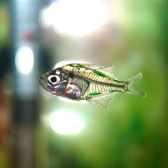 Fish Aquarium Iskelet Balık First Eyeem Photo