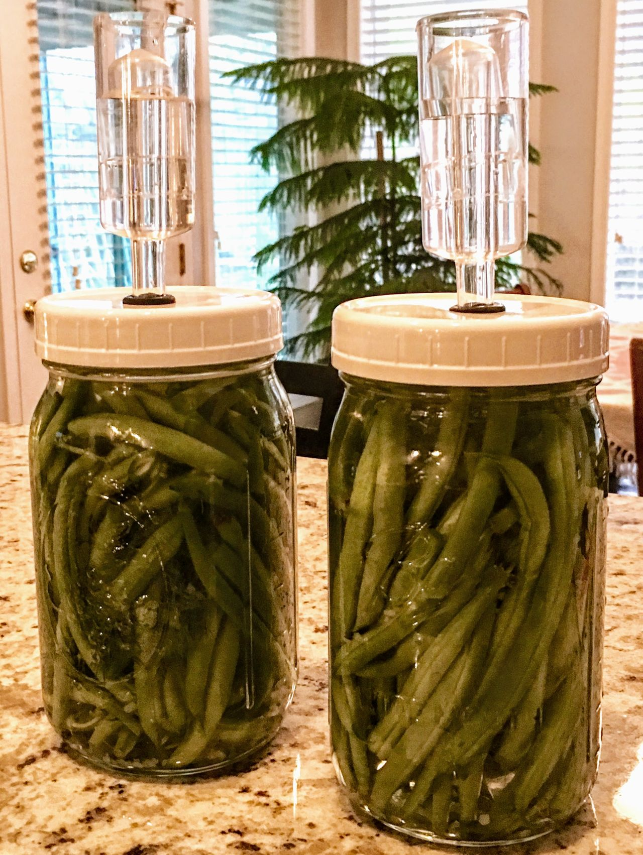 Lacto fermented dill beans Beans Canning Close-up Cultures Day Dill Fermentation Freshness Healthy Eating Kitchen No People Nutrition Outdoors Probiotic Vegetables