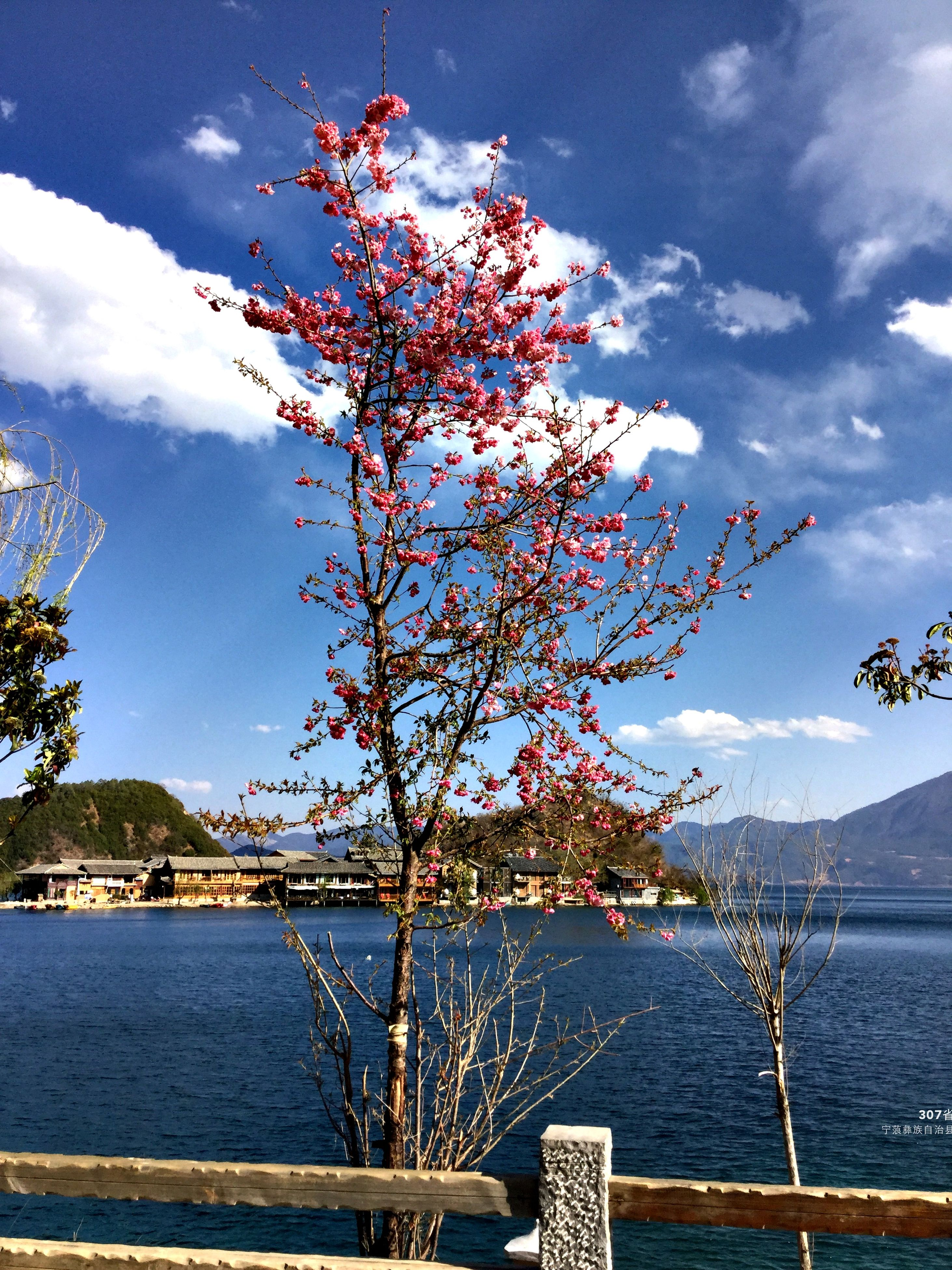 tree, sky, low angle view, growth, cloud - sky, nature, built structure, beauty in nature, building exterior, architecture, branch, blue, flower, cloud, day, outdoors, no people, sunlight, tranquility, hanging