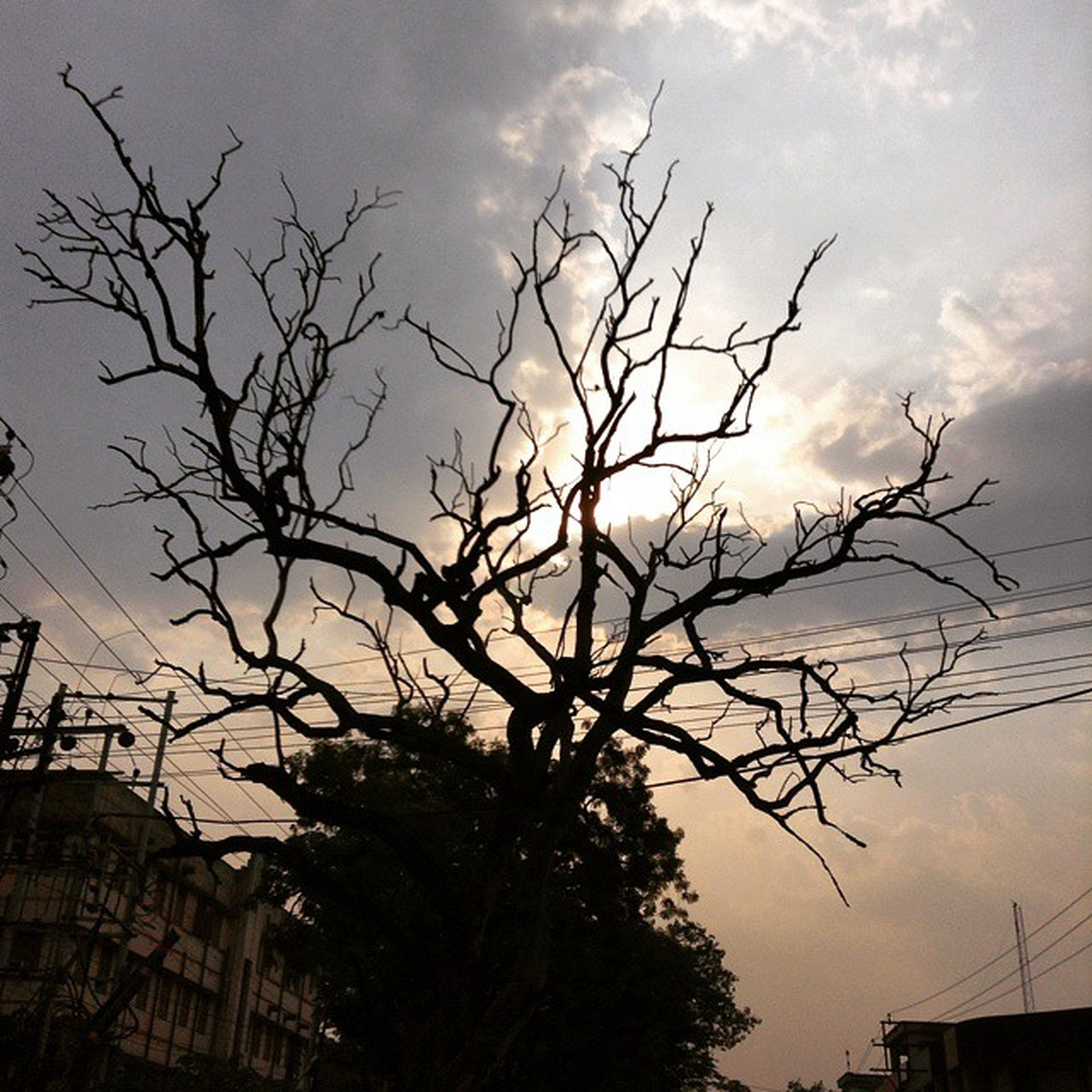 bare tree, branch, sky, tree, silhouette, low angle view, cloud - sky, sunset, building exterior, nature, built structure, cloudy, tranquility, cloud, architecture, dusk, outdoors, no people, tree trunk, beauty in nature