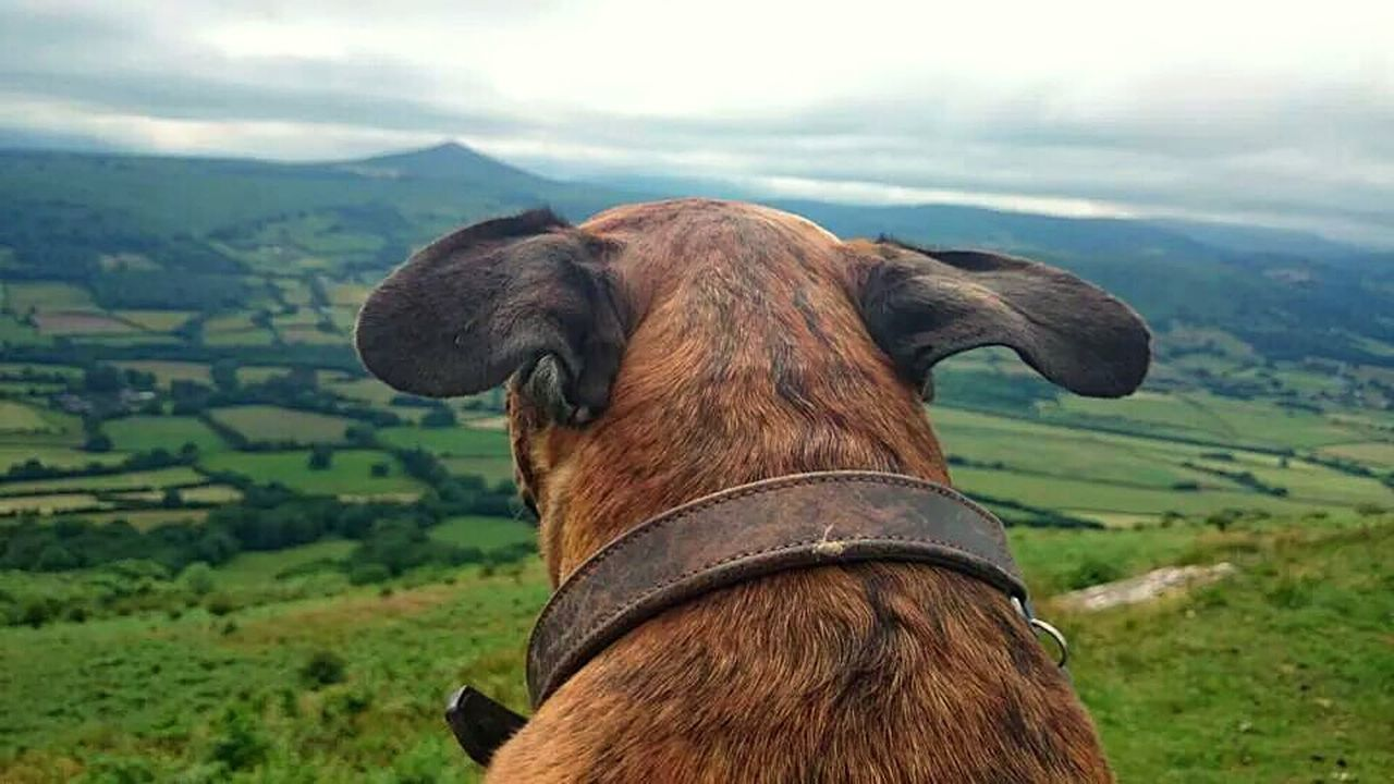 Adventure Buddies me and Boo up the skirrid 🌄 Skirrid South Wales Wales❤ Dog Walking I Love My Dog My Best Friend