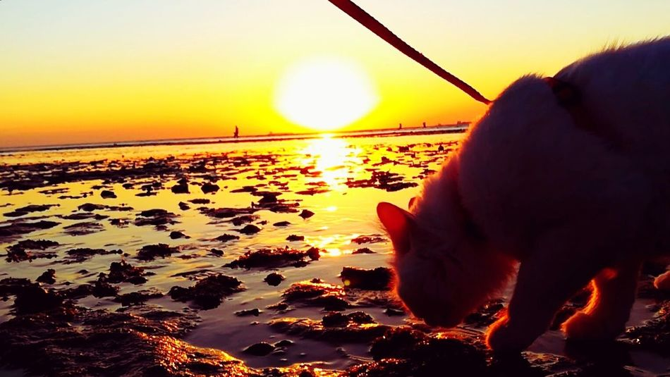 Cat Cat Walking Cat On The Sea Cat On The Beach Cat On Water Mylovelycat❤ Cats Of EyeEm Pets Sea Water One Animal Beach Nature Sea And Rocks Outdoors Close-up Animal Themes Cat Of EyeEm Day Sky Sky And Sea Beach Time Nature Cat Photography Totssy 😍