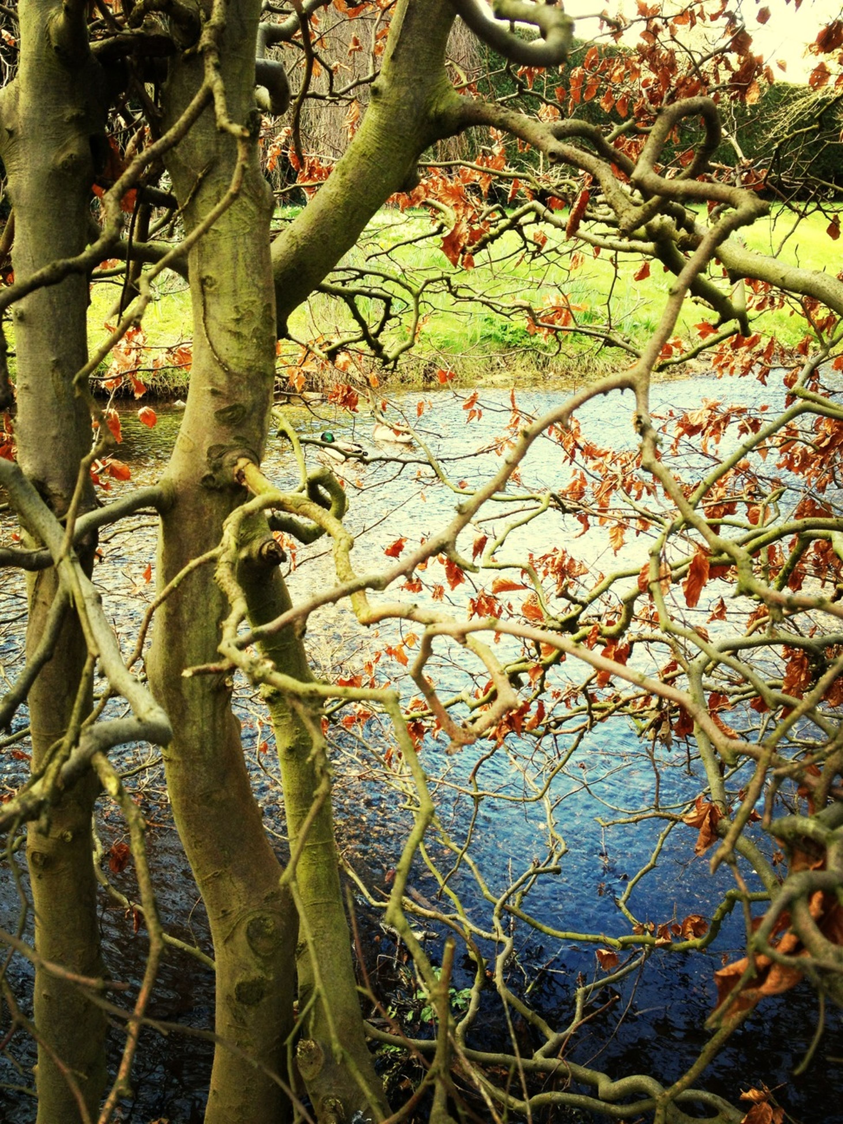 branch, tree, growth, leaf, nature, tree trunk, tranquility, beauty in nature, plant, water, day, bare tree, outdoors, no people, autumn, twig, close-up, scenics, growing, lake