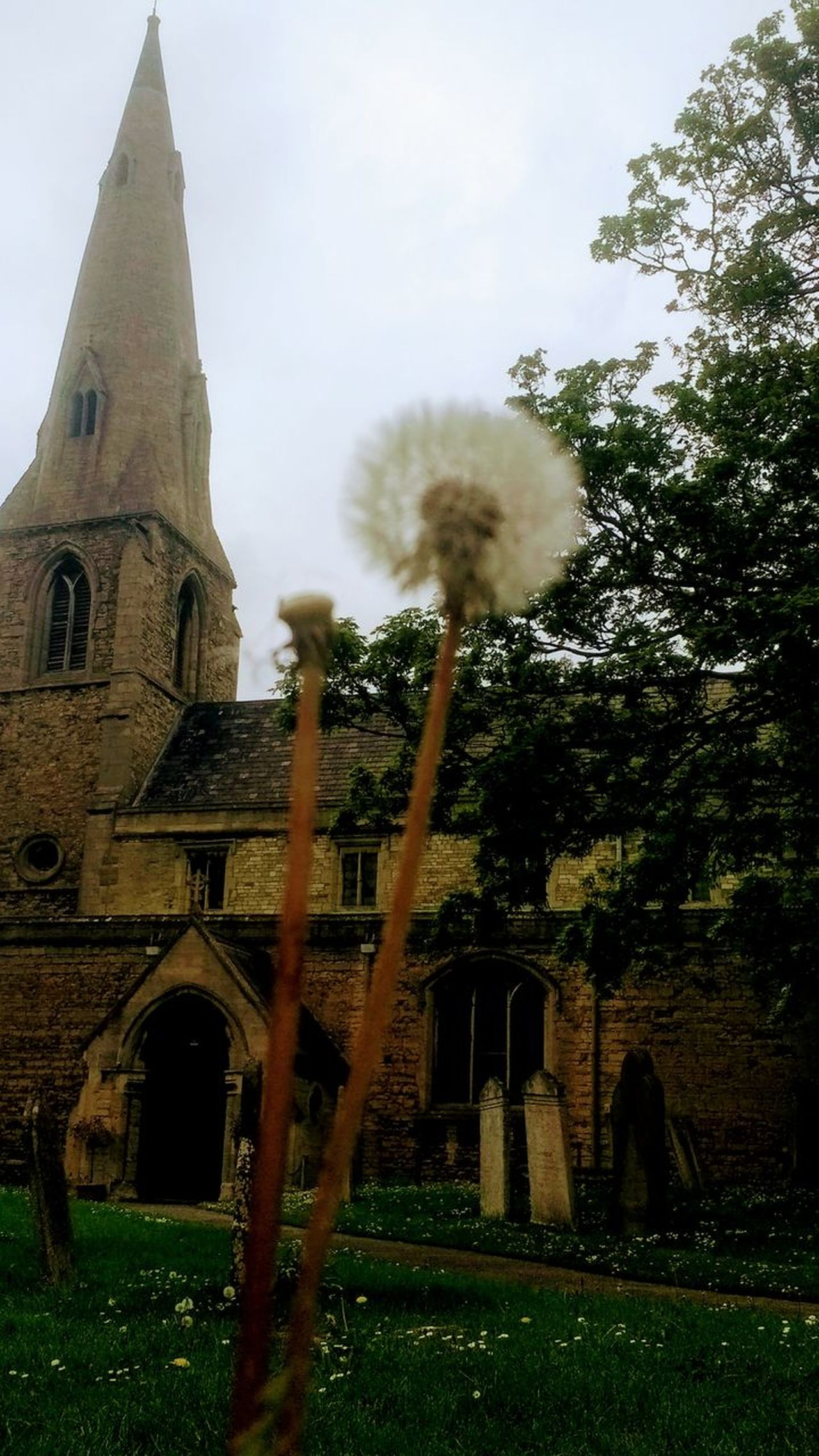 Architecture Built Structure Religion Outdoors No People Day Sky Building Exterior Tree Nature Photography Flower Fragility Dandelions Dandelion Church Architecture Church Church Buildings Architecture Travel Destinations England United Kingdom Peterborough Cambridgeshire