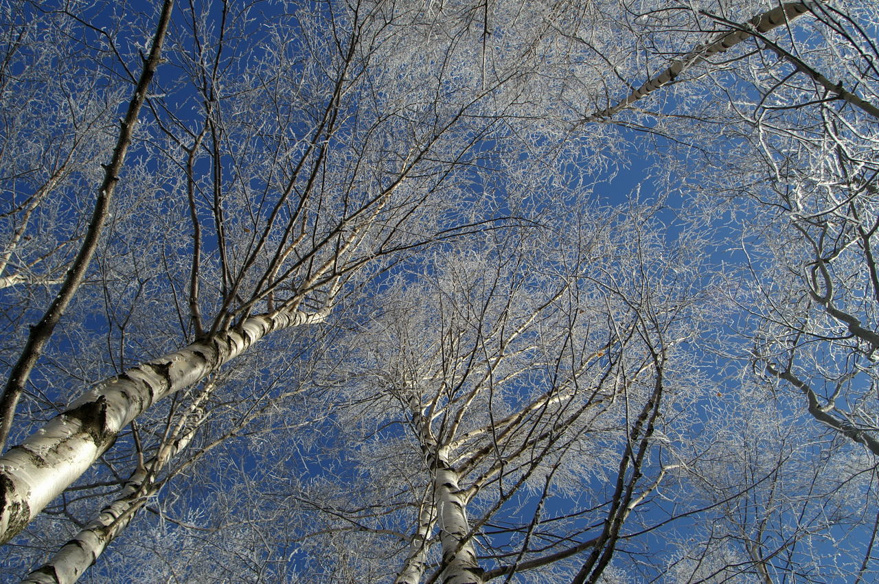 Schweiz Switzerland Wallis Leuk Winter Winter Trees Winter Wonderland Wintertime Blue Sky Blauer Himmel Kalt Cold The Magic Mission