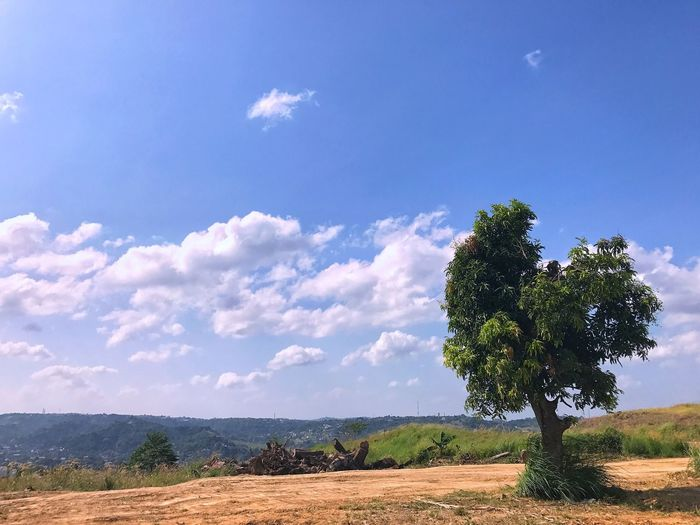 So many reasons to smile 😊 Tree Nature Sky Beauty In Nature Growth Tranquility Blue Scenics Landscape Cloud - Sky Outdoors Tranquil Scene No People Day Mountain Jaysalvarez Photography