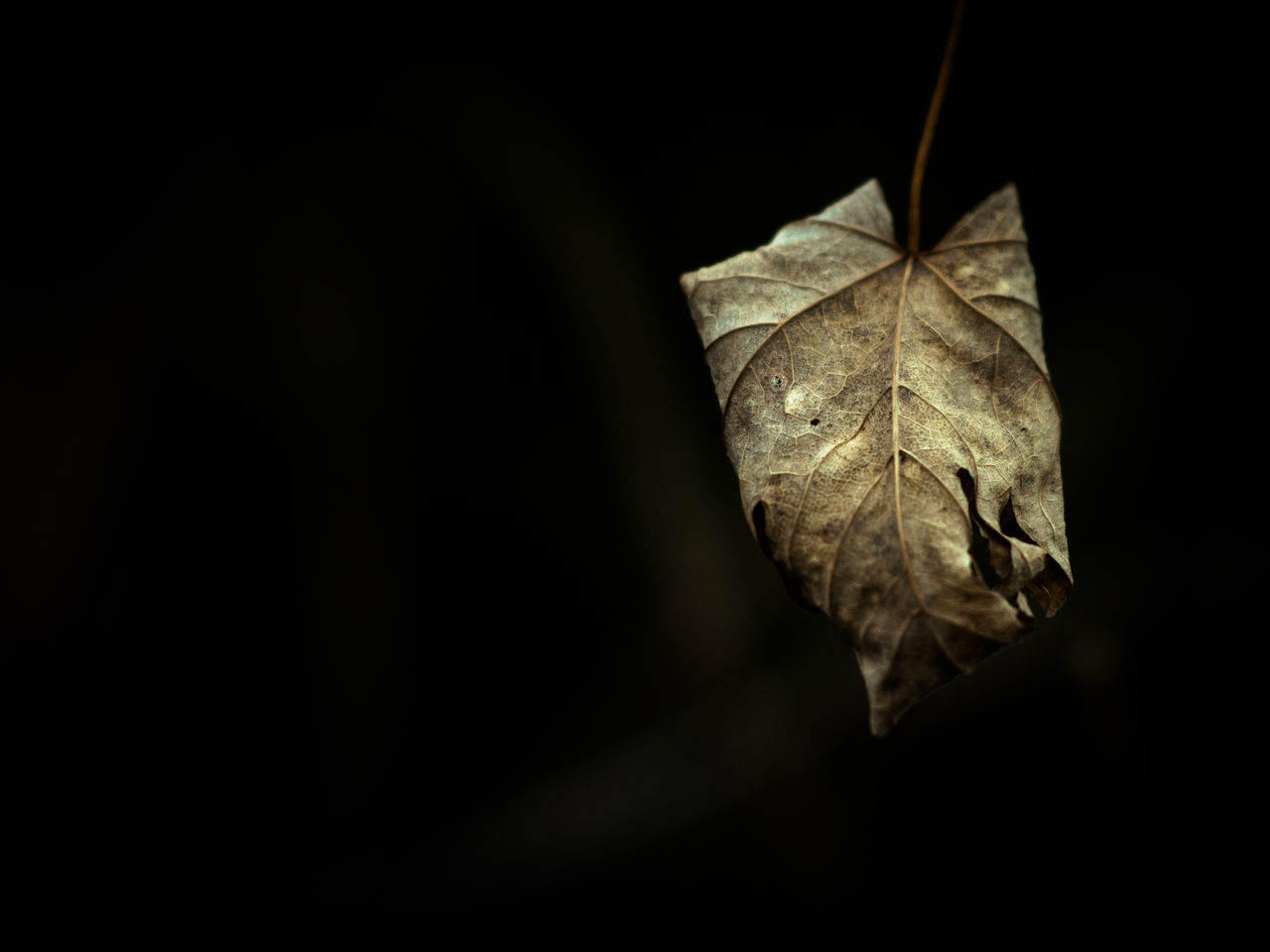 Simplicity Wabi-sabi Nature Beauty In Nature Beautiful Nature No People Atmospheric Mood Leaf Lowkey  Decay Autumn Leaves