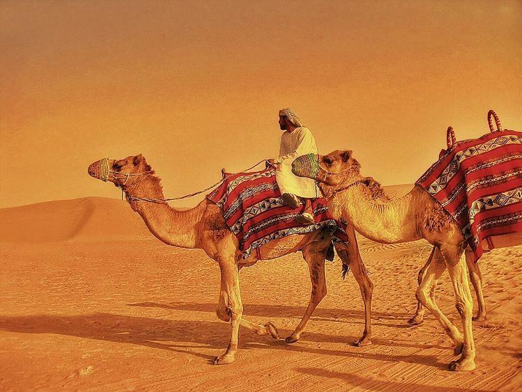 An Eye For Travel 43 Golden Moments Animals Animals In The Wild Arabs Camels Desert Desert Dubai EyeEm Golden Hour Outdoors Sahara Shadow Summer Travel Travel Photography Trip Vacation Camel Sand Sand Dune