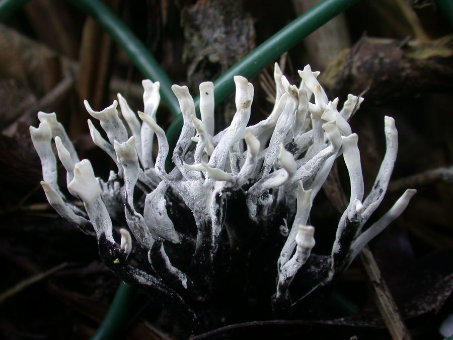 Close-up Coral Fungus Day Fungus Growth Mushroom Nature No People Outdoors