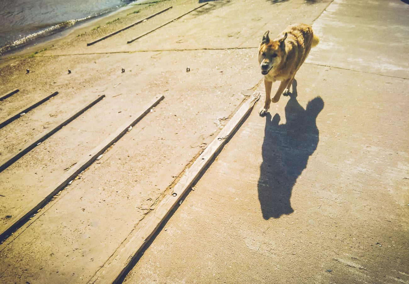 Susurros de un viaje Shadow One Animal Travel Oneplus2 Travel Destinations Susurros De Un Viaje Alexyz Murph Travel Photography Animal Wildlife Smartphone Photography City Buenos Aires Photography Movilphotographer Outdoors Argentina