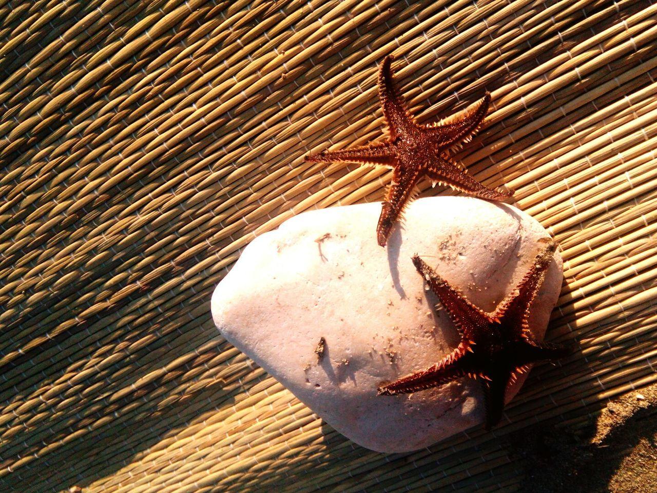 Sunset Sunlight Sea Life Starfish  Starfish At Beach Nature
