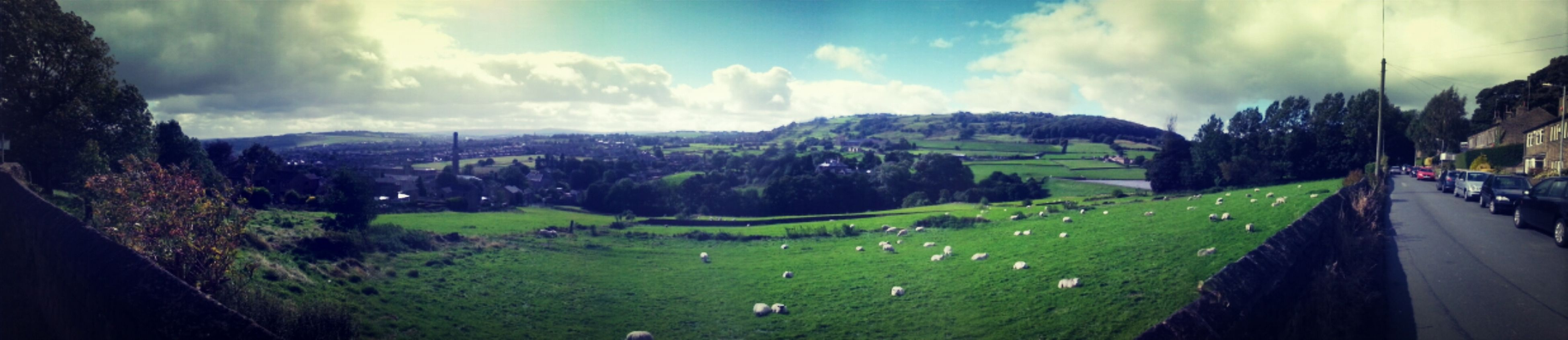 Hanging Out Green Sheep Panorama Countryside Hills