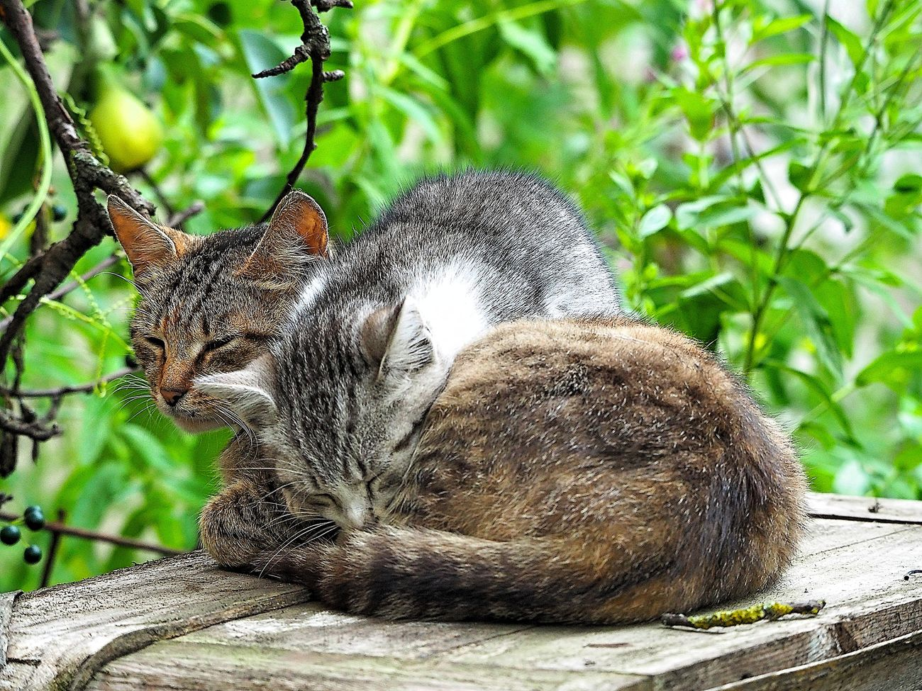 Animal Themes Backyardphotography Cat And Kitten Cats Cute Cats Domestic Cat Homeless Cats Laziness No People Pets Relaxation Sleeping Cats