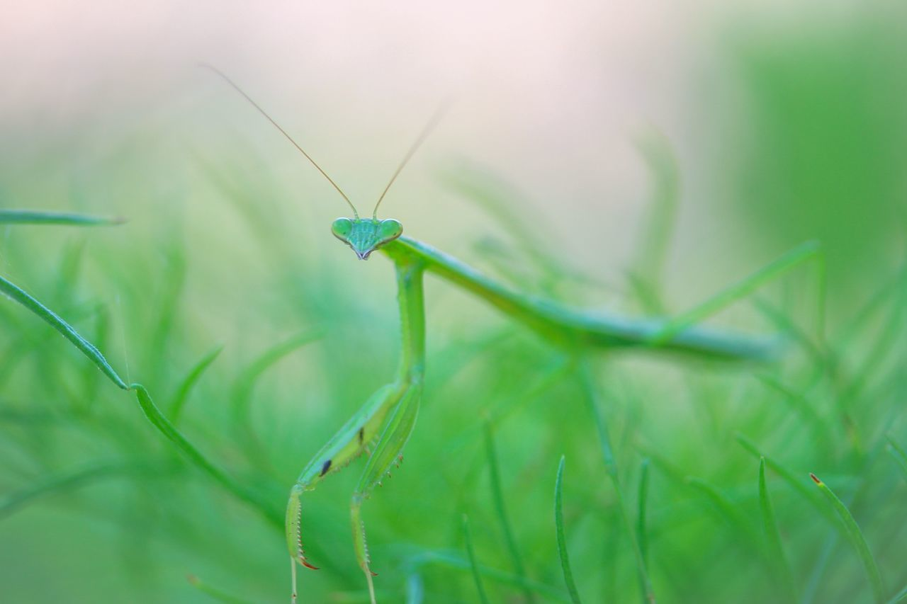 Beautiful stock photos of macro, Day, Focus On Foreground, Full Length, Grass
