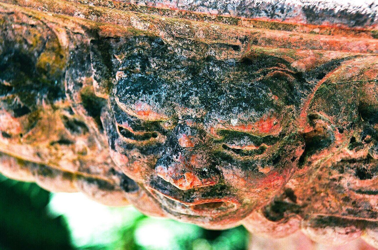 Close-up Bird Bath Nature Koduckgirl Film Photography Film