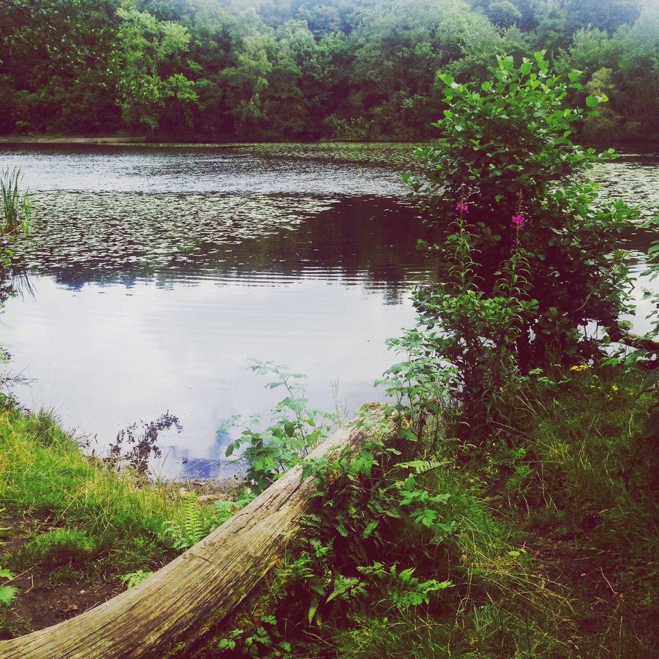 Lake View Lake Log Water Lilles Water Foxgloves