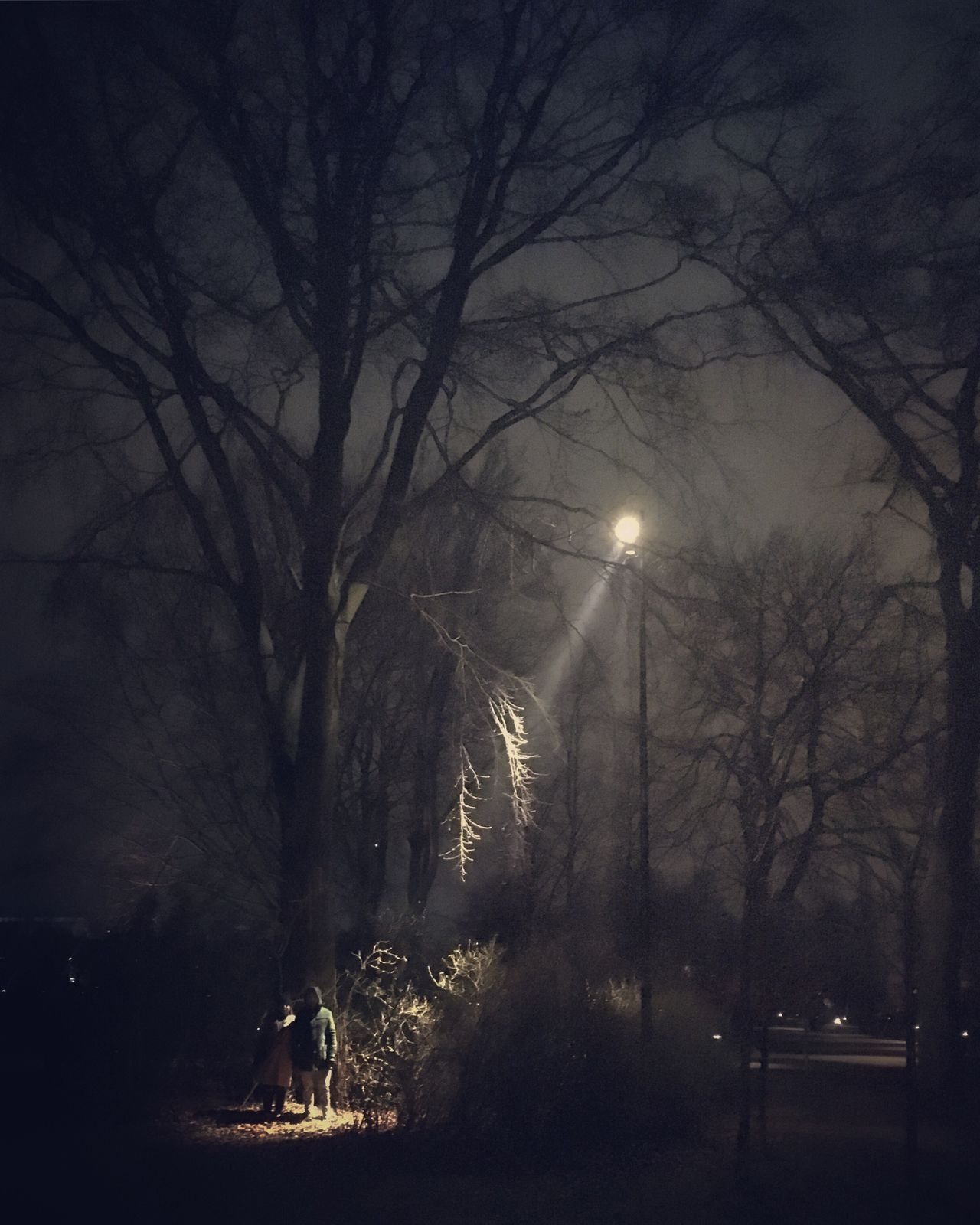 Out For A Walk Tree Bare Tree Night Silhouette Outdoors Illuminated Winter Fog Nature Creepy Moody Copenhagen Copenhagen, Denmark Denmark Dark