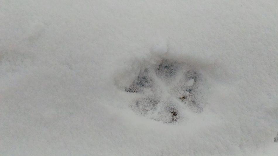 Cats 🐱 Cats Footprint