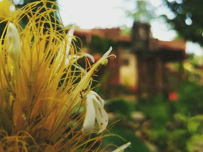 Home. Flowers Nature EyeemPhilippines Outdoors Beauty In Nature Home Home Sweet Home Home Is Where The Art Is S7 Edge Photography Flower Petal Flower Head