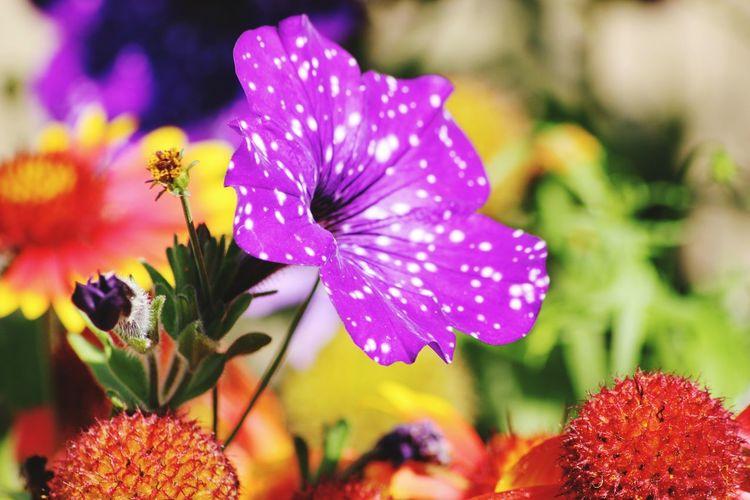 Fleurs Flowers Couleurs Photography