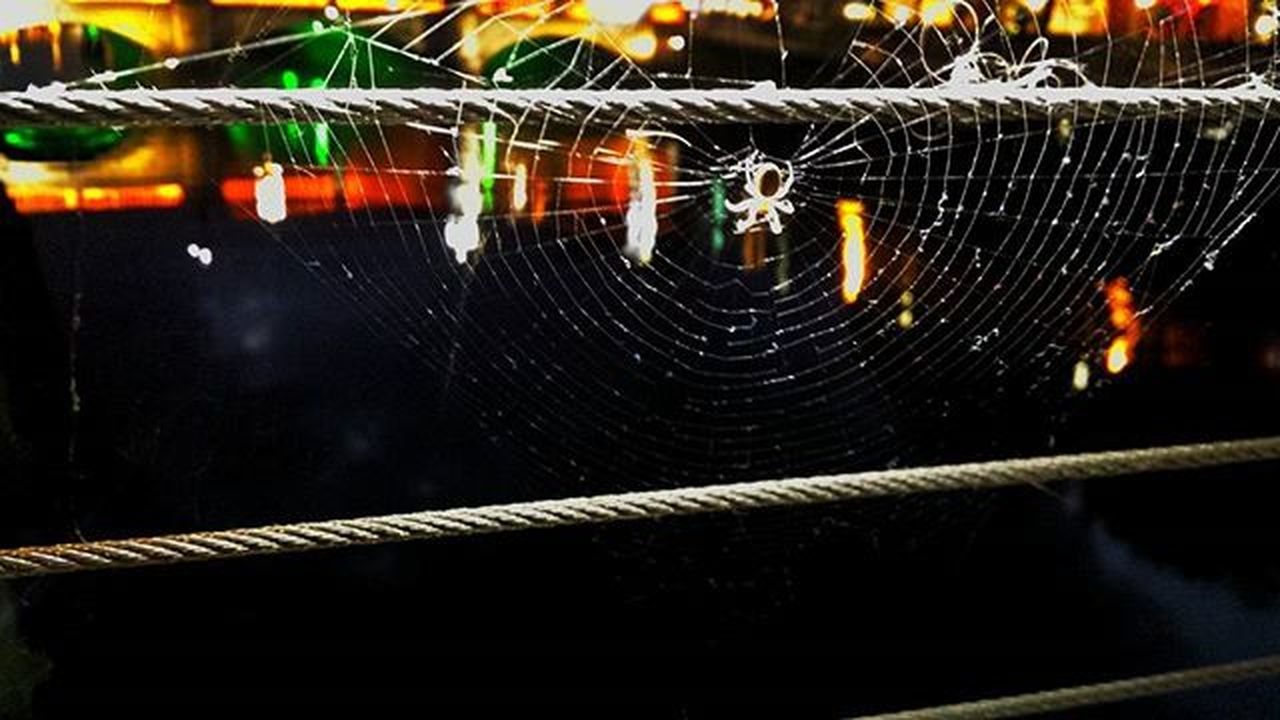 spider web, trapped, no people, one animal, spider, close-up, web, outdoors, animal themes, fragility, harbor, night