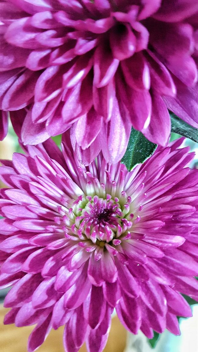 Close-up of a bouquet of birthday flowers Taking Photos Growing Happiness Peaceful Ethereal Simplicity Petals Beautiful Flower Close-up Macro Bouquet Pattern, Texture, Shape And Form Pattern Pieces Natural Beauty Purple Flower Focus On Foreground Beautiful Detail Birthday Flowers Flower Nature Single Flower Textures And Surfaces Showcase: February