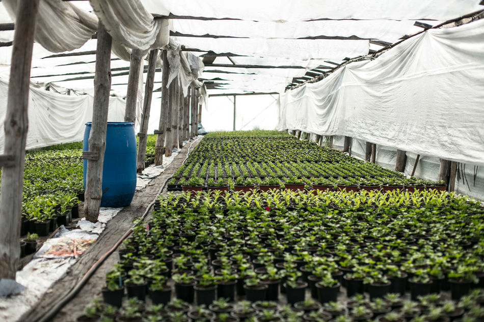 Agriculture Canonphotography Day Discover Your City EyeEm Nature Lover Farm Flowers Food Food And Drink Freshness Fruit Garden Green Color Greenhouse Growth Indoors  Light And Shadow Nature No People Plant Plant Nursery Science The Week Of Eyeem Vegetable