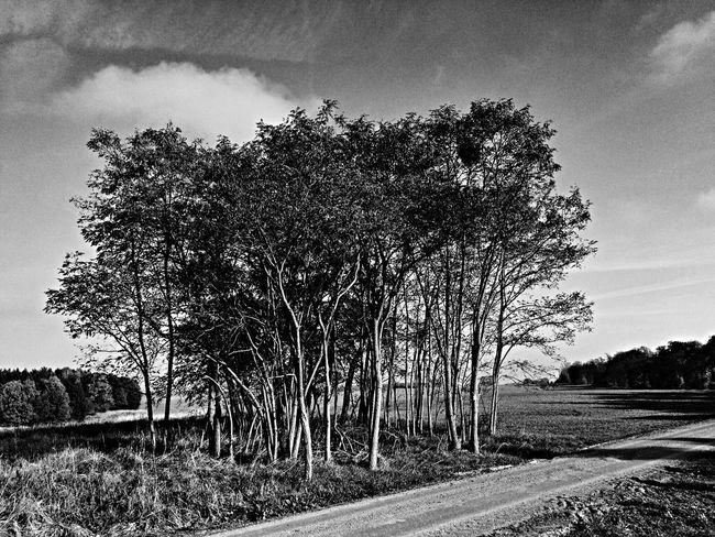 Monochrome Blackandwhite Landscape Light And Shadow