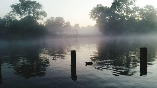 Morning Kennsingtongardens Journey Traveling Magic Hidepark London Kennsingtongardens Morning Beautiful