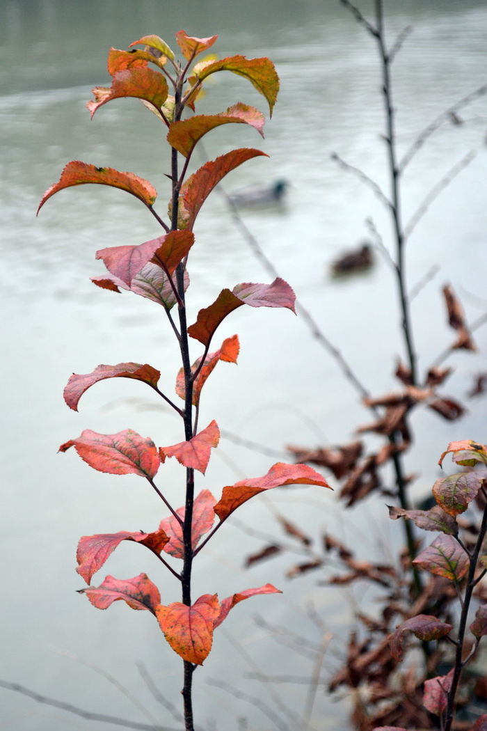 Autumn Colorful Colour Of Autumm Lake Lake View Leaves