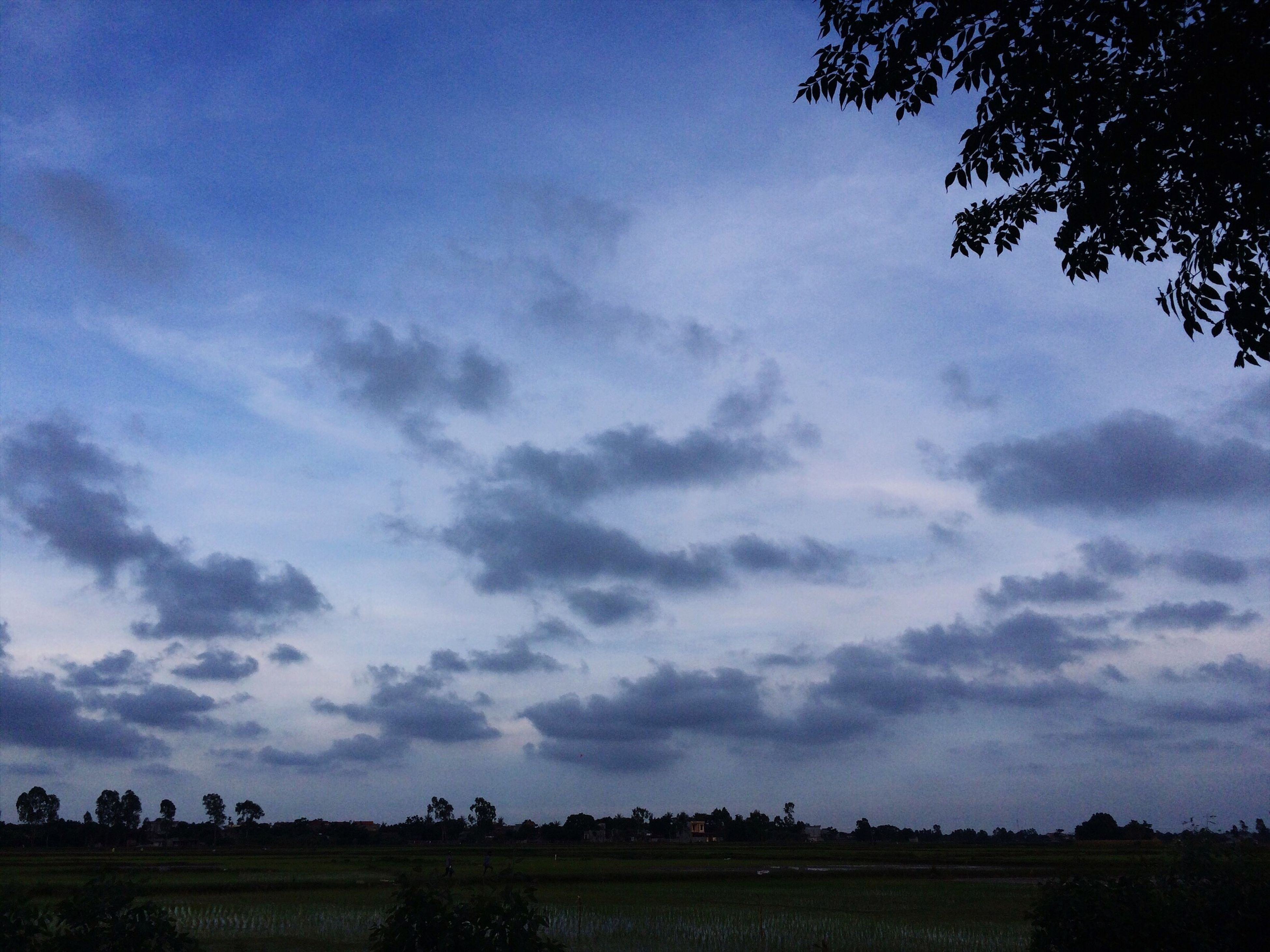 sky, landscape, nature, cloud - sky, beauty in nature, tree, field, scenics, tranquil scene, tranquility, day, no people, outdoors, growth