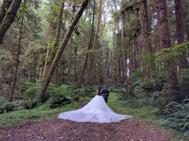 Forest Tree Nature Growth Outdoors Person Bride Groom Wedding Photoshoot Newlyweds Nexus 6P