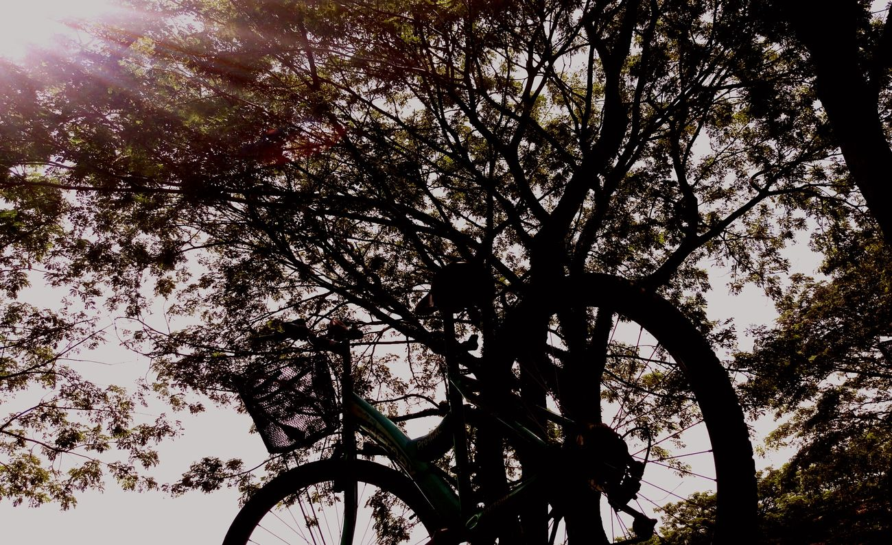 Time to go back campus. End my semester break...cycling in uni life 🚲 Time Past Sem Break End Opening School Back To Campus University Life Hot Sun Summer Bicycle Cycling Long Pathway Green Tree Grass Natural Nature Of Beauty Sweat Swag