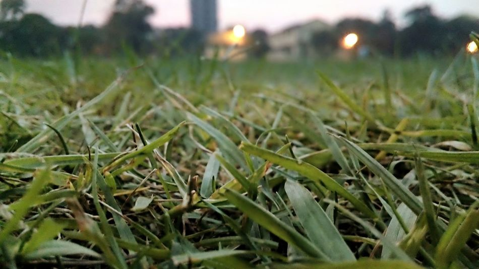 Showcase March Grassy Greenery Distant Lights Colors Evening Sky Micro8MP
