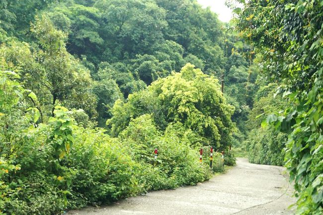 Longdrive through the lush green forest area of mussoorie. Indeed a drive to remember. Green Beautiful Nature Himalayas Mussoorie Drive Longdrive Wonderlust