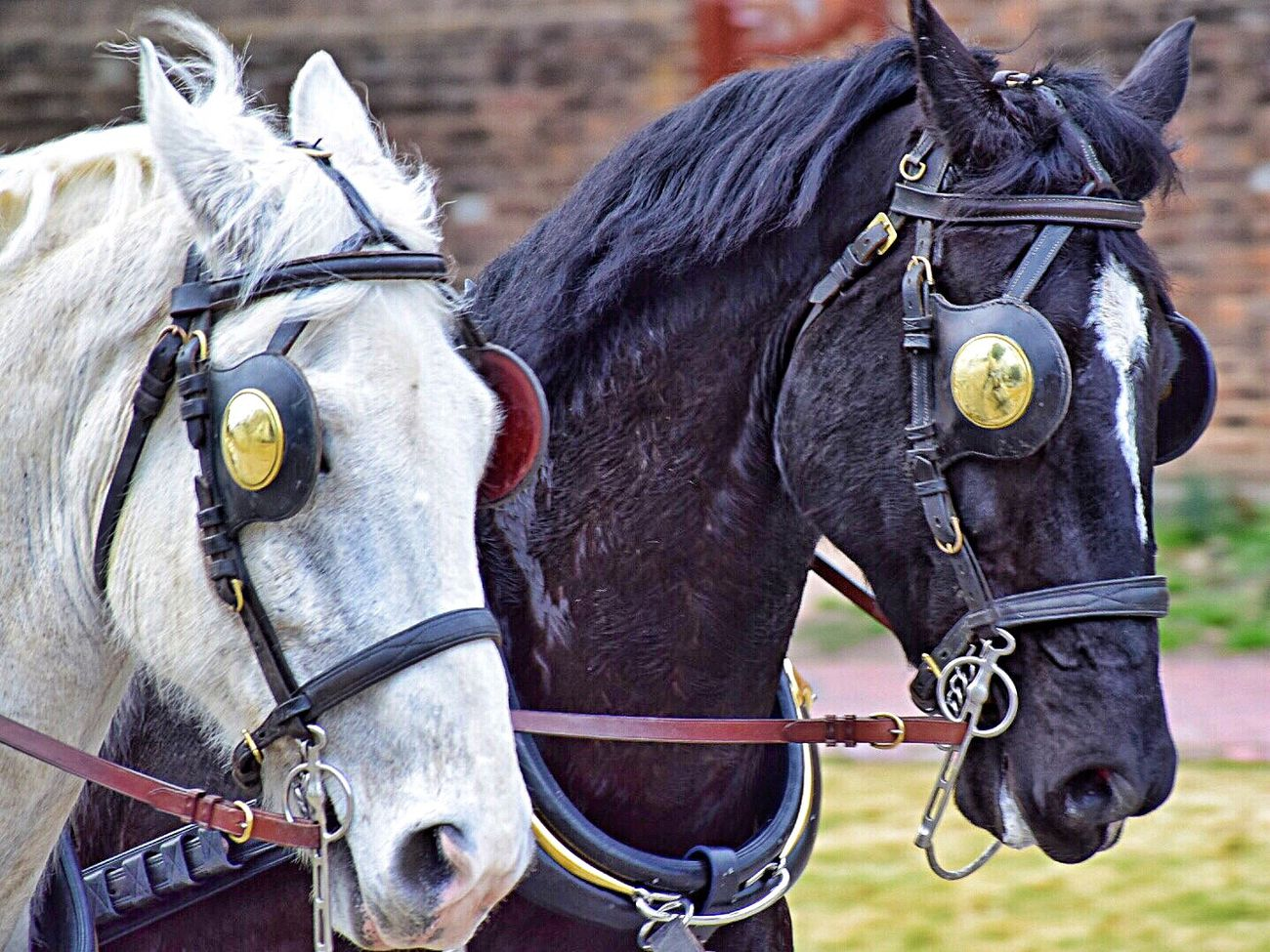 Horses in Colonial Williamsburg Horse Domestic Animals Working Animal Close-up Historical Reenactment Bridle EyeEmNewHere
