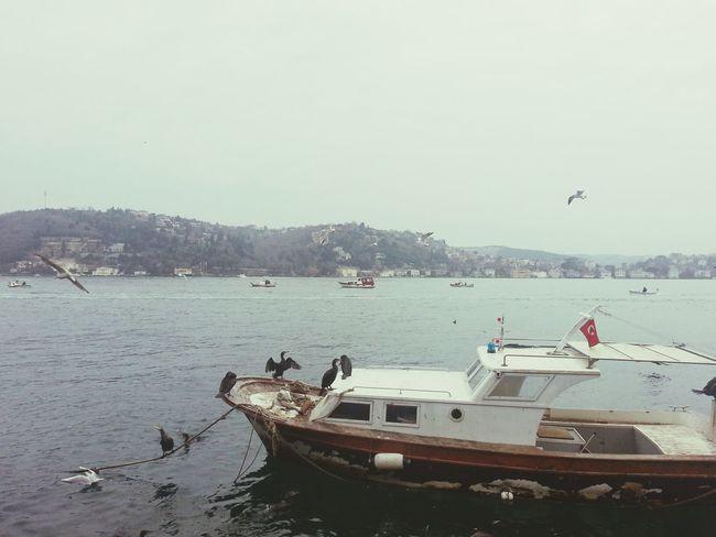 Bosphorus, Istanbul Sea And Sky Birds In Flight Ontheway