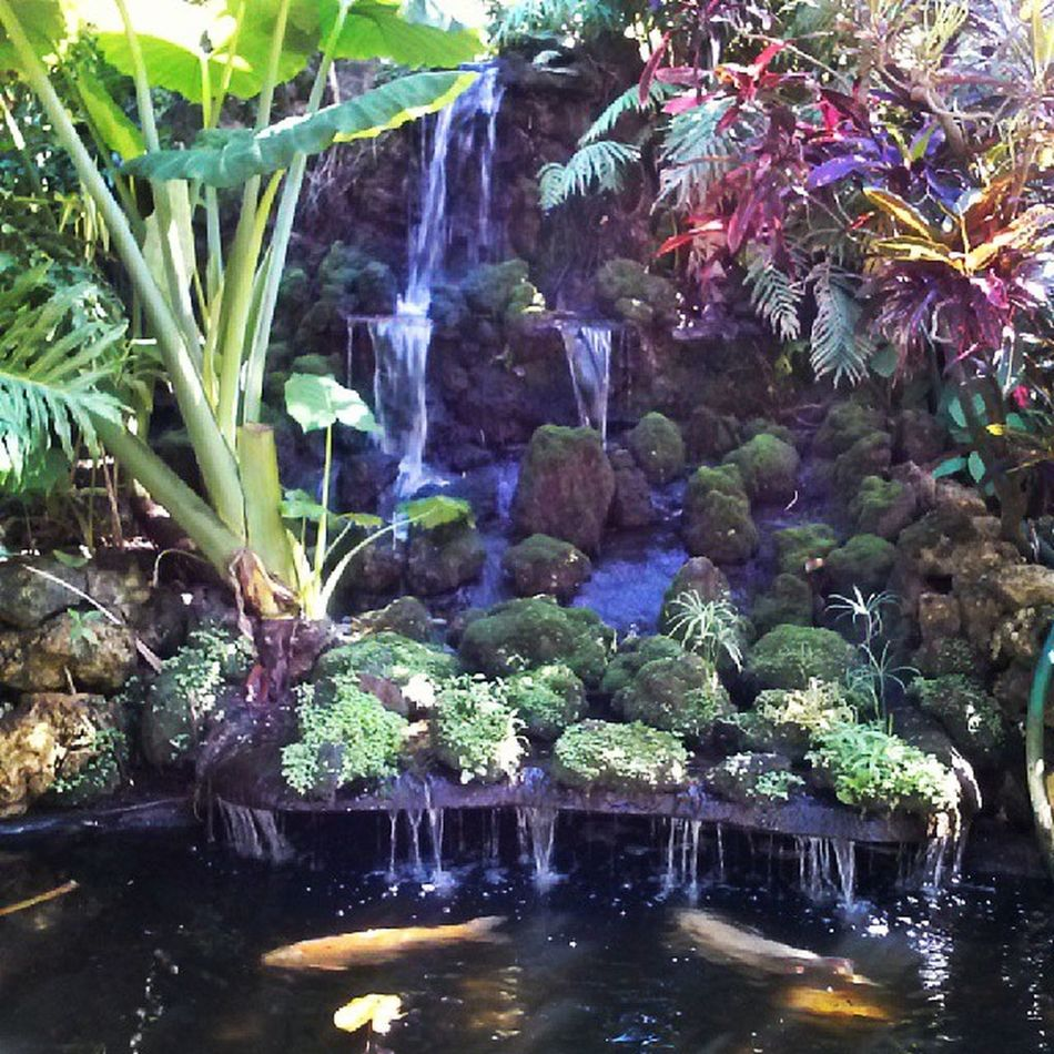 Koi Waterfall