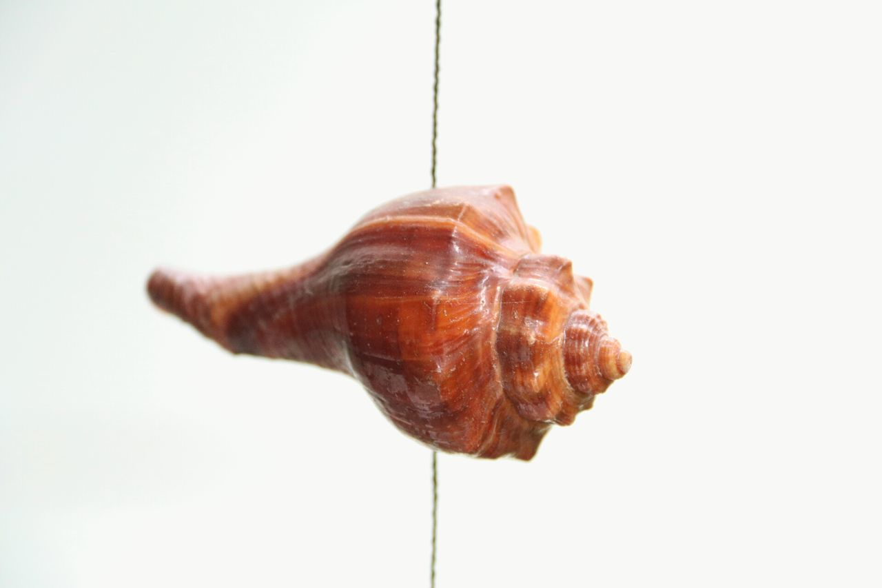 one animal, snail, animal themes, white background, no people, close-up, gastropod, nature, studio shot, slug, animals in the wild, day, fragility, outdoors