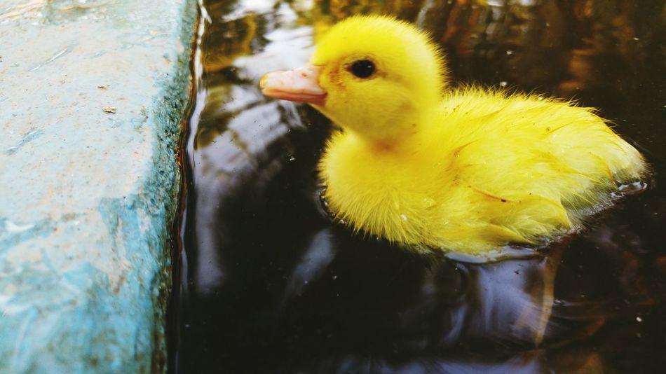 Beautiful stock photos of swimming, Animal Themes, Animal Wildlife, Animals In The Wild, Bird
